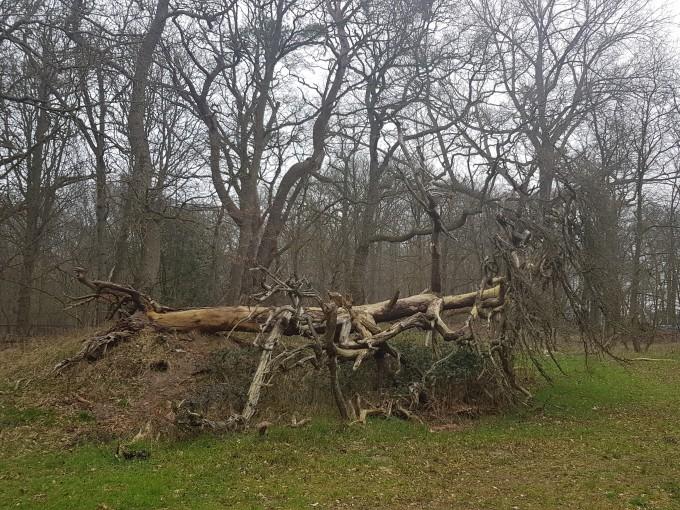 Opgebaarde boom